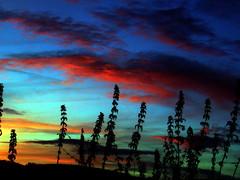 ...Le soleil peint, (suite) (Dominique Dumont Willette) Tags: fleur rouge soleil silhouettes vert bleu ciel nuages tournesol couchant gers midipyrnes