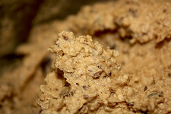PB Oatmeal Chocolate Chunk - Dough