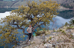 Kalamalka Lake reflections  - Mike and an old Juniper