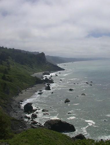 Redwoods National Park 1205z