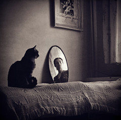 (gosia janik) Tags: light cat self mirror thelittledoglaughed masterpiecesofphotography venusinthemirror aplaceonbed