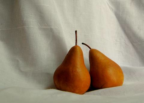 still life photograph pears fruit