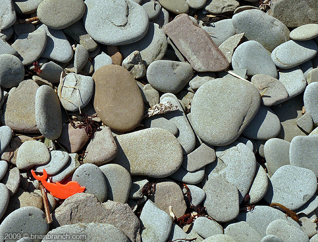 P1010049_beached
