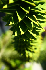 Un torbellino (misperspectivas) Tags: cactus flower verde flor blanca margarita morada usurbil