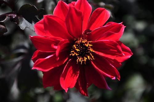 Botanical Garden 083