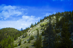 big sky (THEMACGIRL*) Tags: trees summer mountains montana roadtrip bigsky 1855mmf3556