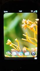 Palm Pre main screen