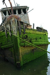 The Mary D. Hume, a boat, built in 1881, Gold River, Oregon, USA (Wonderlane) Tags: old usa green rotting mystery oregon boat moss ship ghost aground workhorse goldriver 6447 builtin1881 themarydhume