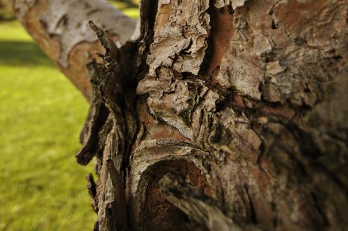 july0109_tree2