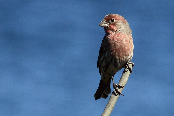 589_houseFInch_sm