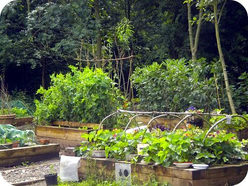 Veg garden @grozone