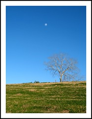 Willow Waterhole Sky (dog.happy.art) Tags: blue sky moon tree landscape texas houston hoizon