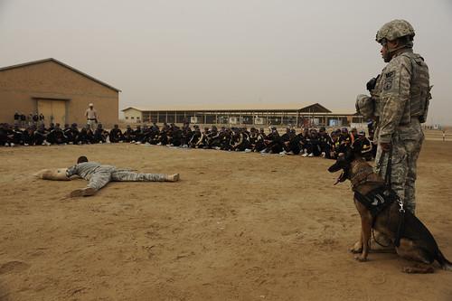 infantry training iraq echo harris combatcamera irq iraqipolice 4thid diwaniyah militaryworkingdogs 1ctcs