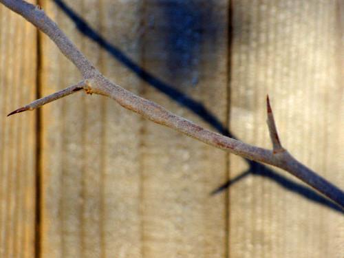 stick 2.jpg