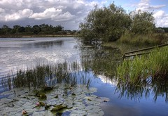 England: Northamptonshire - Lily Lake revisited (Tim Blessed) Tags: uk sky nature water clouds reeds landscapes countryside scenery lakes lilies ponds willows gmt singlerawtonemapped