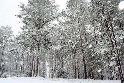 Snow in Alabama 2009