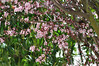 PRIMAVERA TEMPRANA /EARLY SPRING (yoymicaballo) Tags: flores primavera palencia fuentesdenava