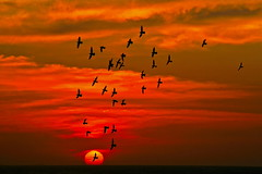 Birds flying in PARADISE (Beto Frota) Tags: sunset brazil praia beach beautiful birds brasil cores flying paradise colours flock vivid fortaleza cear paraiso jeri blueribbonwinner mouseion platinumphoto aplusphoto diamondclassphotographer flickrdiamond rubyphotographer grouptripod naturescreations dragondaggerawards thebestofcengizsqueezeme2groups