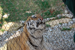 She is hungry (BrotherShine) Tags: animals zoo louisvillezoo