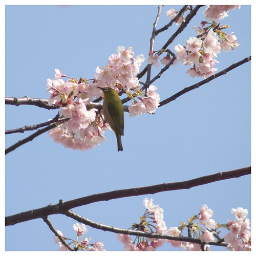 Cherry & Bird 090319 #01