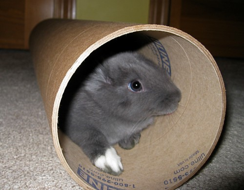 Bunny in the tube