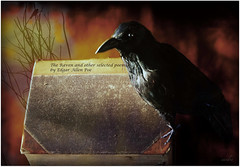 ~~ The Raven ~~ (xandram) Tags: photoshop book literature poe theraven week12 theunforgettablepictures graphicmaster 52themes