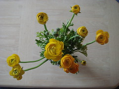 Ranunculus from the grocery store