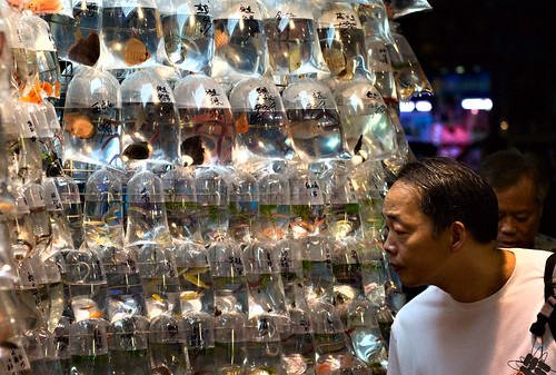 Fish Market 01
