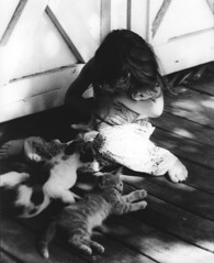 Shelby and kittens (Peggy D) Tags: blackandwhite film kittens granddaughter summertime