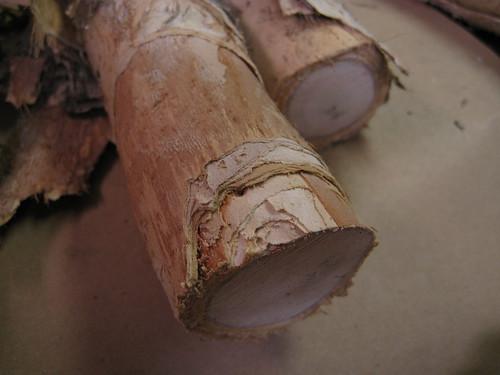 peeling away paperbark bark layers
