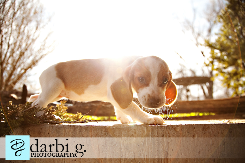 Darbi G photography-dog puppy photographer-_MG_1253-Edit