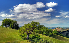 Mount Diablo Foothills (John-Morgan) Tags: california usa foothills green grass clouds canon landscape spring oak day cloudy cumulus bayarea openspace wilderness walnutcreek hdr mountdiablo shellridge johnmorgan platinumheartaward