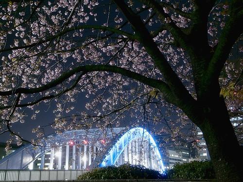 永代橋に寒桜