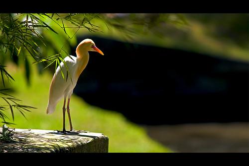 KL Bird Park - Bird A