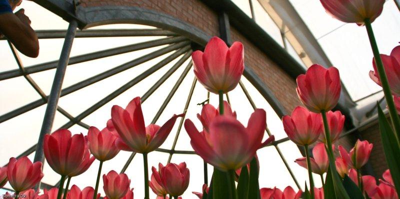 Flower 4 - Blog