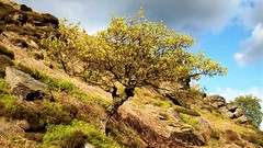 Holmfirth, Digley Reservoir Tree (Darren Schofield) Tags: tree nature landscape countryside yorkshire pennines holmfirth huddersfield digley