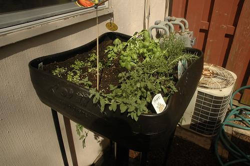 our mini-garden