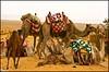 (848) Pause für Alle / Everybody makes a break. (unicorn 81) Tags: ägypten libyandesert libyschewüste saharadesert weisewüste nationalpark desert sand africa dunes dune travel landscape egypt nationalparkwhitedesert nationalparkweisewüste whitedesert sunset westerndesert sahara white egyptian mapegypt misr schulzaktivreisen égypte ægyptusintertravel reise rundreise colourful nature trekking aegyptus 2009 saharacolors coloured camel egipto color colorful ashowoff roundtrip platinumheartaward april2009 egypttrip ägyptenreise northafrica nordafrika whitedesertnationalpark animals animal animale êtreanimé tierkinder animalbaby egypte egitto egipt egypten αίγυπτοσ ægypten meinjahr2009 geotagged fun spas ausruhen sleep relaxing snapshot tiere
