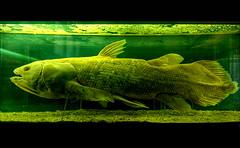 Not In A Chinese Restaurant! (Regina J.) Tags: vienna wien fish green dead sterreich glow pentax 1020mm hdr nhm museumofnationalhistory pentaxk20d ftwien ftwien090418 austriasigma1020mmf456exdc