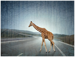 Lost Giraffe on the Highway (Ben Heine) Tags: street travel light wild sun art texture portugal nature colors sepia season print landscape countryside vanishingpoint highway poem colours photographie