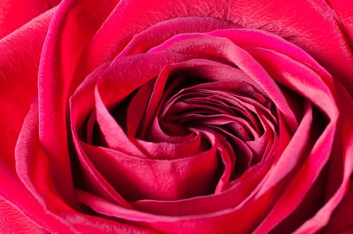 A Dozen Roses for Mom - 2
