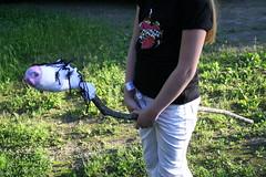 Hoppy-Horse