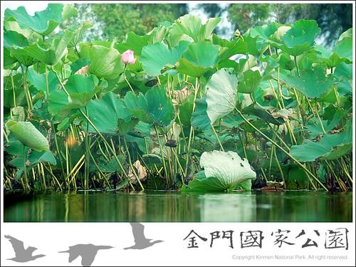 雙鯉濕地中心-08