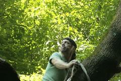 _MG_6354.JPG (zimbablade) Tags: trees sleepyhollow dougmiller videopoem