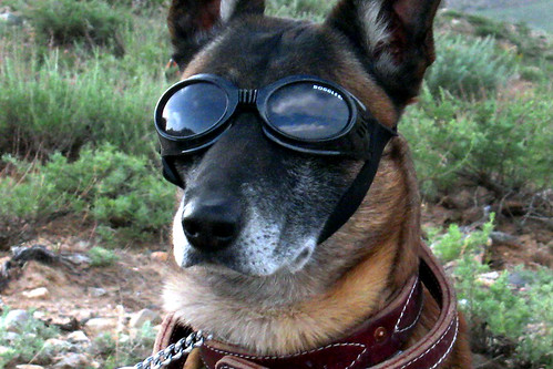 Doggles for military working dog