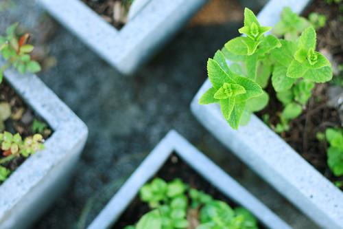 groensel1