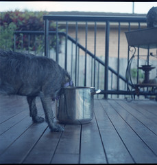 ruby chews (bk) Tags: house reflection rolleiflex ruby sandys longlegs kingscliff fujipro800z shelovedit sunnyqueensland newsouthwalesactually lookingtowardthetweedkinscliff imaderisottofordinner