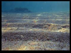 My World عالمي الخاص (ALQABBANI) Tags: world بحرية تصوير الخاص أزرق عبدالعزيز بحر رمل my كاميرا طحالب سمكة غوص اعماق عالمي القباني سامسونج أعشاب
