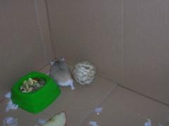 Squishy (Blonde_Geek) Tags: hamsters