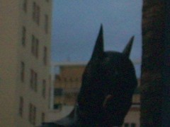 batman (stuntwood) Tags: fotos